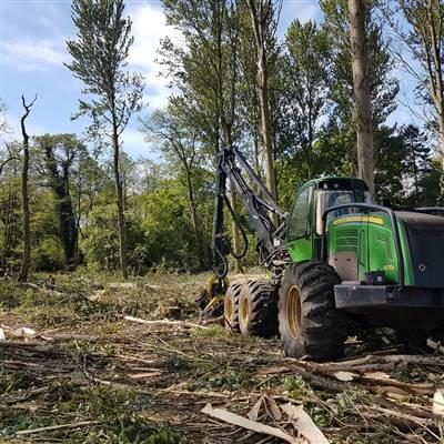 forestry estate management